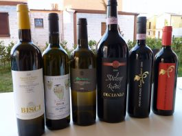 top wines from Marches