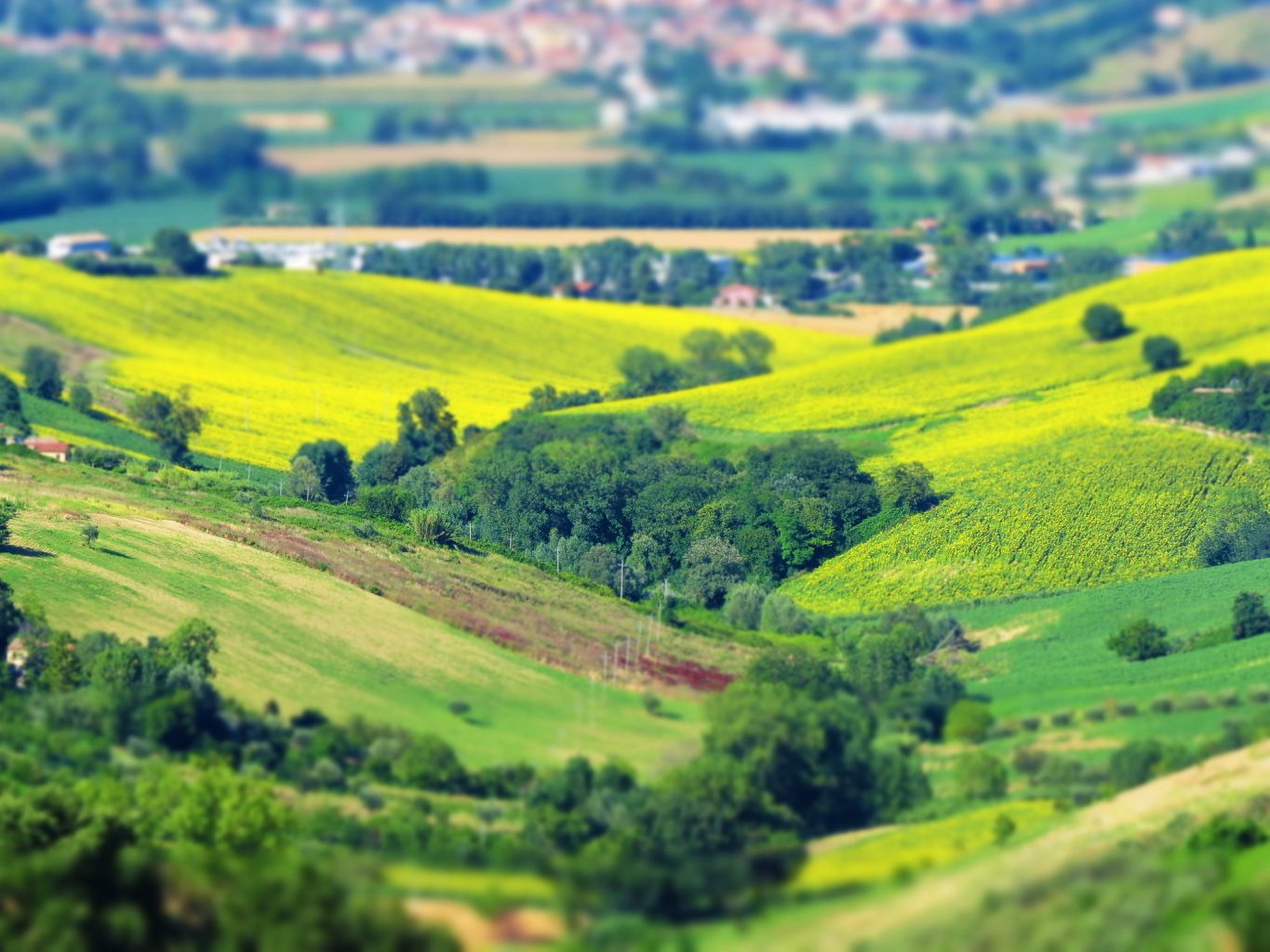 "alt=""Green hills of Le Marche Italy"""