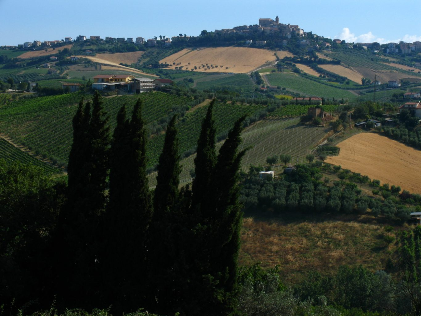 "alt=""Vineyards in le Marche"""
