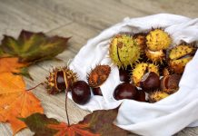 Why not try the Marche's unique chestnuts?